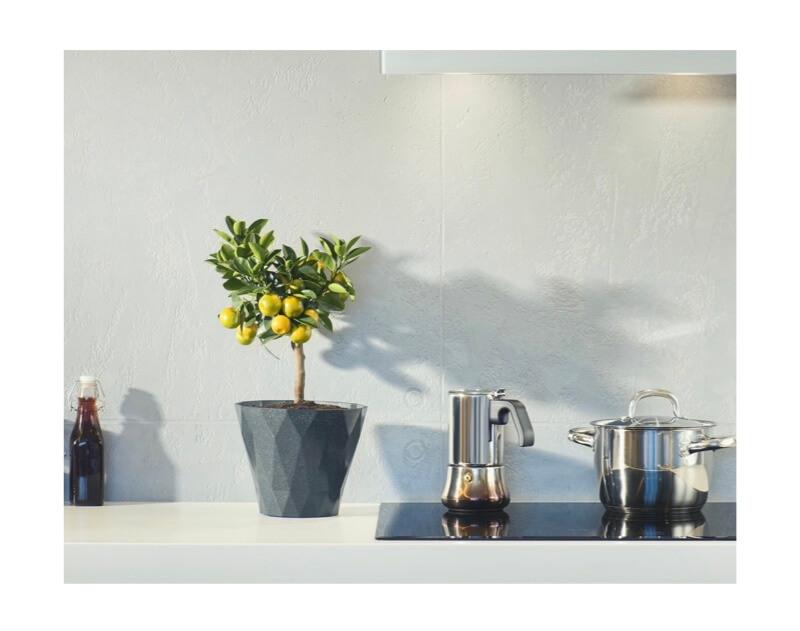 lemon tree in kitchen